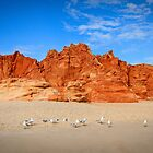 Locals - Cape LeVeque, WA by Bart The Photographer
