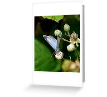Holly Blue Female Greeting Card