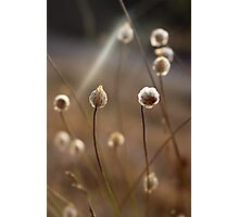 WILD II Photographic Print