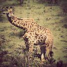 Giraffe by Matt  Streatfeild