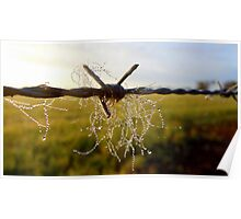 Dewy cattle hairs. Poster