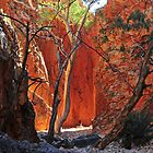 Standley Chasm  by mspfoto