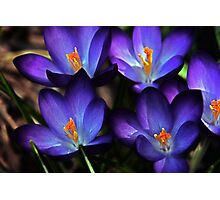 First Gift of Spring Photographic Print