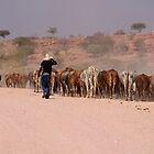 NAMIBIAN CATTLE by IngridSonja