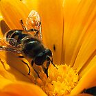 Hoverfly by Simon Marsden