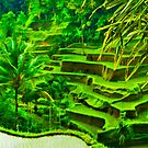 Terrace Rice Fields  by Angie Muccillo