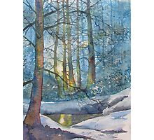 Winter Light in the Forest Photographic Print