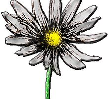 Simple Daisy Flower by mashupofme