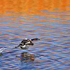 Walking on Water by David Clark