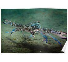 Crab dash - Lembeh Straits Poster