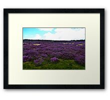 Heather on the Moors. Framed Print