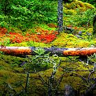 """""""SPAGNUM MOSS"""" on the FEN  by Larry Trupp"""
