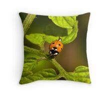 Six Spot Ladybird Throw Pillow