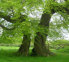 Split tree in Burley Wood by Kathy Dellow