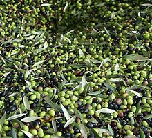 Olives by PDV2015