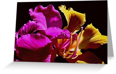 Fantasia Flower by myrbpix