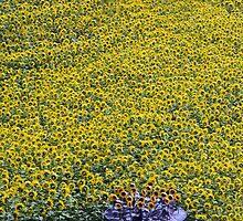 Field of Sun by Lizzylocket