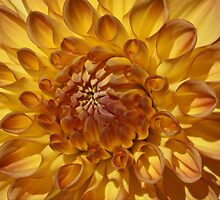 Golden Sunshine by Monnie Ryan
