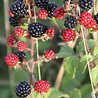 BERRY by Debbie Ashe