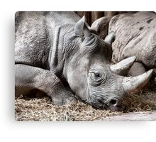 Restful Rhino Canvas Print