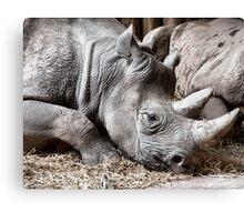 Restful Rhino Canvas Print