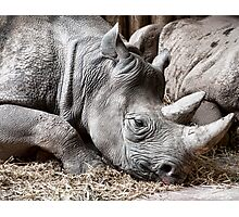 Restful Rhino Photographic Print