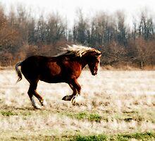Freedom Run - Draft Horse Running Free by jlkinsey