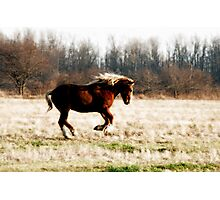 Freedom Run - Draft Horse Running Free Photographic Print