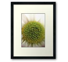 Macro Daisy Framed Print