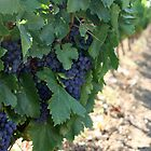 ON THE VINE by Debbie Ashe