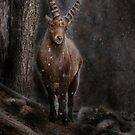 Ibex in Winter - Photoshop Manipulation by Michael Cummings