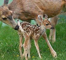 Mule Deer Mother & Fawn by Vickie Emms