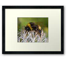 Bust Bee Framed Print