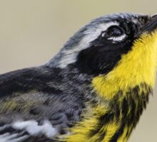 Magnolia Warbler in Breeding Colors Sticker