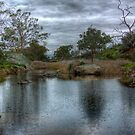 The Pond - Mannum Falls, Riverland, South Australia by Mark Richards