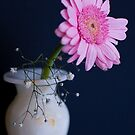 PInk Gerbera  by DIANE  FIFIELD