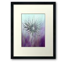 Dazzling Purple Daisy Flower Framed Print