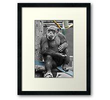 Old Boy  Framed Print