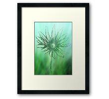 Forest Green Daisy Flower  Framed Print