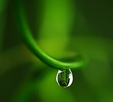 drop in green by Ingrid Beddoes