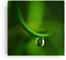 drop in green Canvas Print