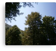 Trees and the sky Canvas Print