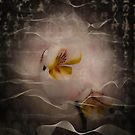 Orchid Manipulation by Julie-anne Cooke Photography