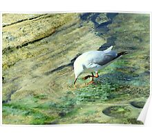 Gull Dancing in Rock Pool Poster