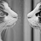 Kitty Reflection by Evan Adnams