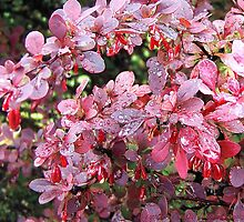 Summer Glory by rocamiadesign