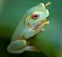 Red Eyed Frog by Jennifer Bailey