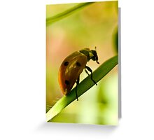 Tiny Forager Greeting Card