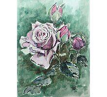 Lavender Rose Photographic Print