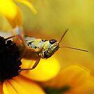 In a Yellow World by KatsEyePhoto